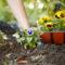 Лунный календарь пересадки комнатных растений на февраль 2021